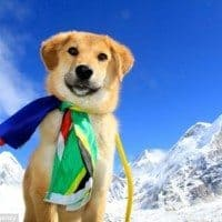 A puppy rescued from the depths of a dump in India now ascends to a base camp on Mount Everest.