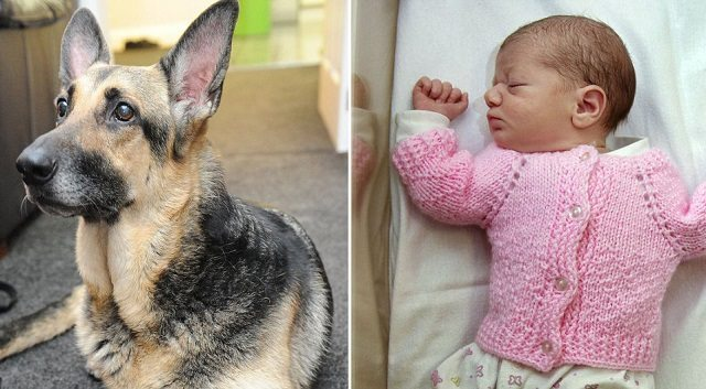 Abandoned Baby Girl Rescued by Dog Hero
