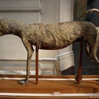 Museum Exhibit Shows Importance Of Dogs In Ancient Egyptian's Lives