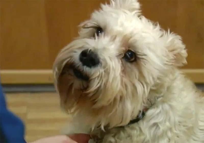 Dog Finds Owner At Hospital