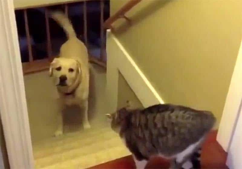 Cat won't let dog pass