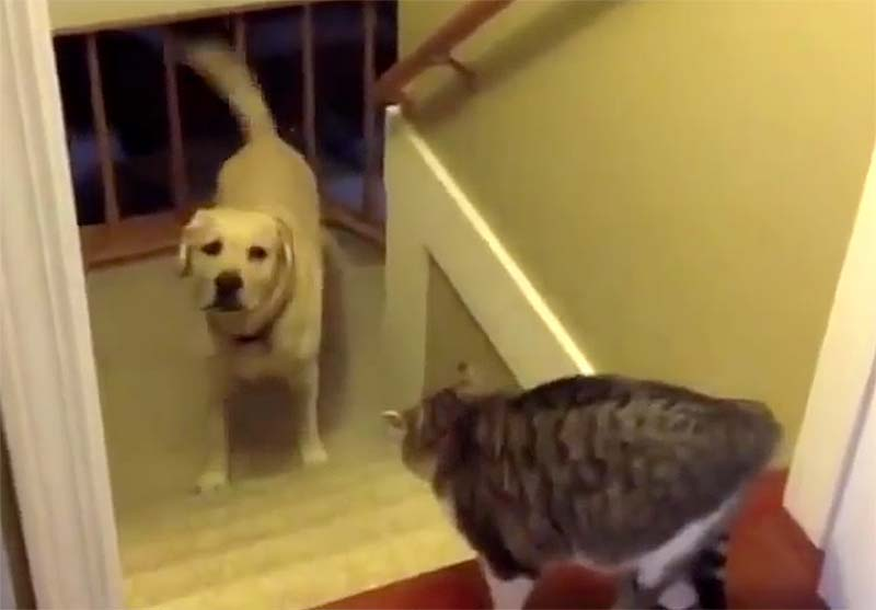 Cat won't let dog pass