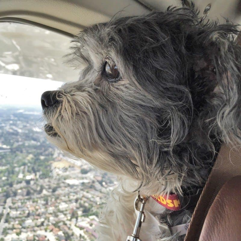 Pops On Plane 2