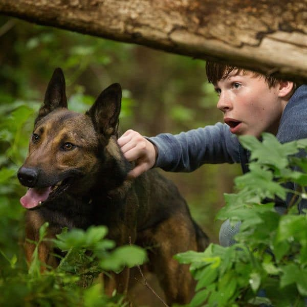 """Max"" the Movie tells the tale of a brave Military War Dog with PTSD"