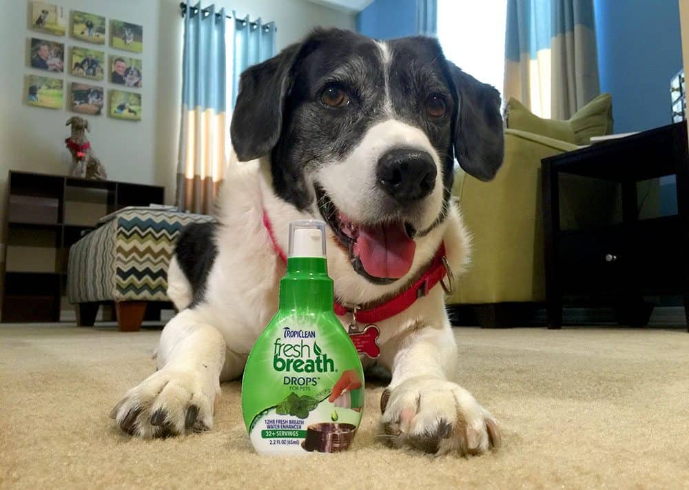 Triumph Over Bad Dog Breath With TropiClean!!!