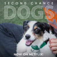 Dog Files Latest Documentary, Second Chance Dogs, Now on Netflix!