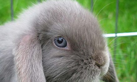 Are Cosmetic Companies Still Testing On Animals?