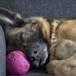 Have Trouble Sleeping After A Bad Day? Your Dog Does Too!