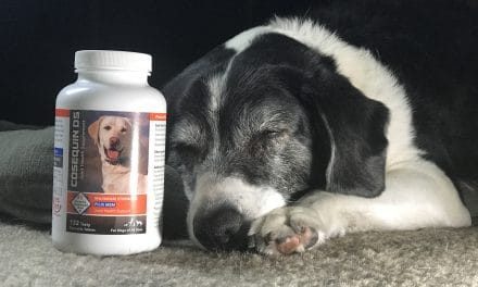 Protected: Cosequin DS Plus MSM Joint Health Supplement For Dogs At BJ's Wholesale Club!